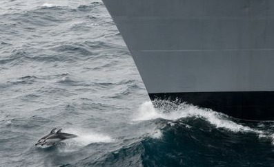 Navy Admits Sonar Could Harm Whales and Dolphins | Earth Island Institute Philippines | Scoop.it
