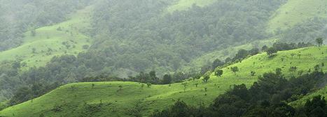 La déforestation finance plus de plantations : Le nouveau projet de loi sur le Fonds de reboisement compensatoire en Inde   WRM en français   Confidences Canopéennes   Scoop.it