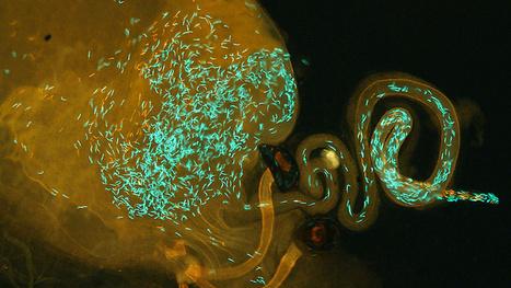 Sperm Wars Can Create New Species   Modern Biology   Scoop.it