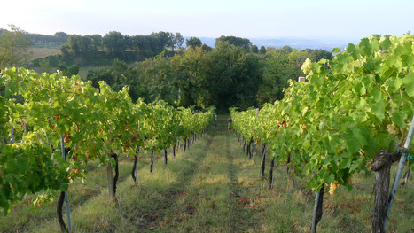 Crespaia: winery of the Bianchello del Metauro and Sangiovese from Pesaro hills | Wines and People | Scoop.it