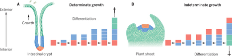 Science: How a long-lived fungus keeps mutations in check (2014) | Plant Pathogenomics | Scoop.it