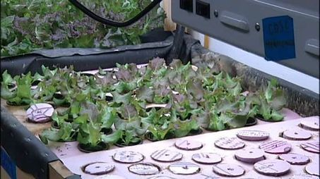 Urban Farm Effort Helps Sprout Hunger Awareness - NY1.com | Vertical Farm - Food Factory | Scoop.it