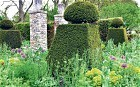 Chelsea Flower Show: this year's trends  - Telegraph | Annie Haven | Haven Brand | Scoop.it