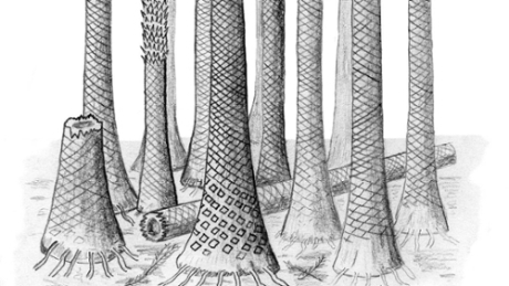 #FF Tropical fossil forests unearthed in #Arctic #Norway | Limitless learning Universe | Scoop.it