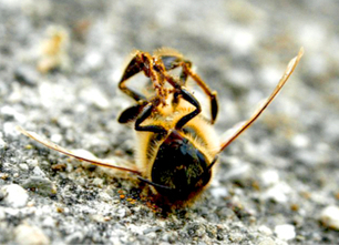 Pesticides to Blame for Massive Bee Deaths in Minnesota | EcoWatch | Scoop.it