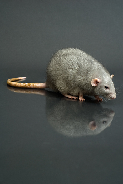An Ounce of Prevention Can Help Control Rodents | The Miracle of Fall | Scoop.it