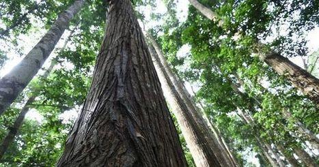La Côte d'Ivoire veut protéger ses parcs et ses réserves | Biodiversité | Scoop.it