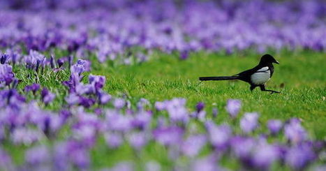 Une petite victoire pour les fouines, belettes, pies et corneilles... | Nature en ville et Biodiversité | Scoop.it