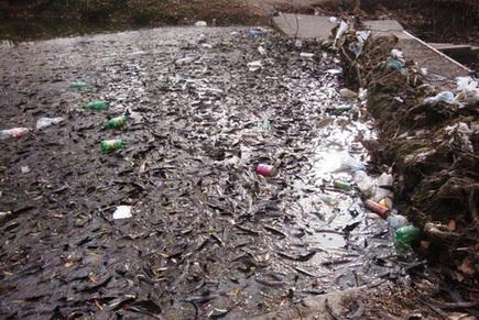 Opinión: Placebos para el Río Luján - Noticias Mercedinas | Delta de Tigre | Scoop.it