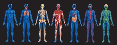 Exhaled Pounds: How Fat Leaves the Body | Anatomy & Physiology articles | Scoop.it