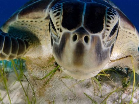 #Wildlife #Photographer Of The Year 2013: Jaw-Dropping, Award-Winning Photos - Huffington Post | Rescue our Ocean's & it's species from Man's Pollution! | Scoop.it