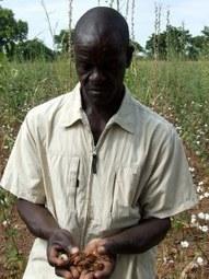 Au Burkina Faso, la fronde de la société civile contre les OGM   Questions de développement ...   Scoop.it