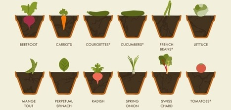 The Simple Vegetable Gardening Cheat Sheet: All You Need to Know | GMOs & FOOD, WATER & SOIL MATTERS | Scoop.it