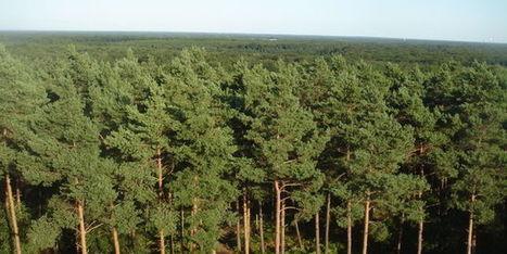 Dans les bois d'Orléans, on anticipe le climat futur - le Monde | Actualités écologie | Scoop.it
