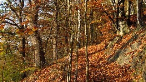 Les arbres de la planète disparaissent. Et moi, et moi, et nous ? Emoi. | Chronique d'un pays où il ne se passe rien... ou presque ! | Scoop.it