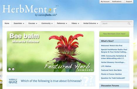 HerbMentor News 71: Bee Balm Oxymel   D.I.Y. Herbalism   Scoop.it