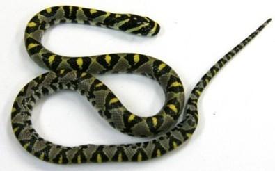 Australie : un avion cloué au sol par un serpent de 20 cm - RTL.fr   IP VOUS RECOMMANDE...   Scoop.it