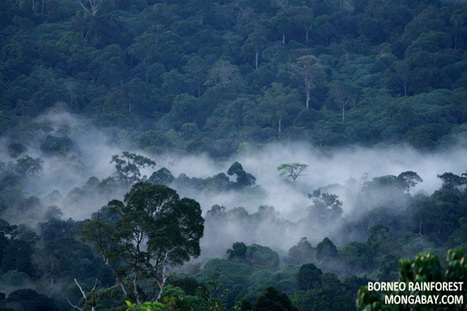 #Climatic Role of Forests | Nature Animals humankind | Scoop.it