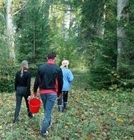 Desarrollo personal: Como estilo de vida, ver el bosque y no solo árboles. | Camino del Kaizen Personal | Scoop.it