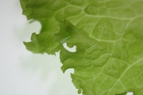 Students in Florida schools grow their own hydroponic lettuce | School Gardening Resources | Scoop.it