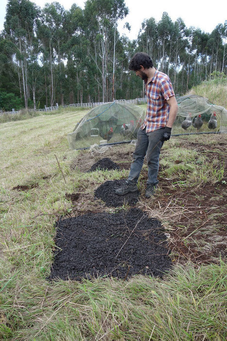 New use for biochar – Biochar as a security device. | BioChar | Scoop.it