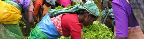 Sri Lanka Mag | Tout sur le business au Sri Lanka | One-Big-Web | Scoop.it