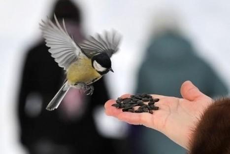 En hiver, nourrissez les oiseaux du jardin ! | biodiversité - ornithologie - biologie de la conservation | Scoop.it
