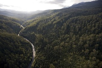 New World Heritage nomination for Tassie forests - The Wilderness Society | Life on Earth | Scoop.it