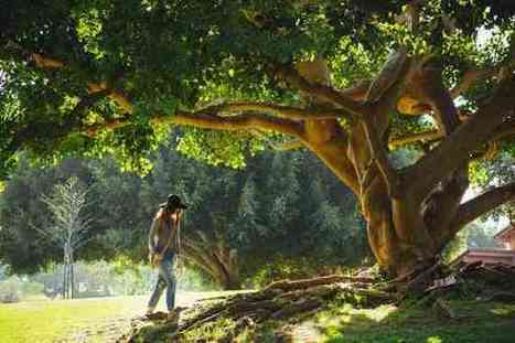 Trees, Glorious Trees - Green Tech Box - Green Tech Information, Products, Guide and Reviews | Technology | Scoop.it