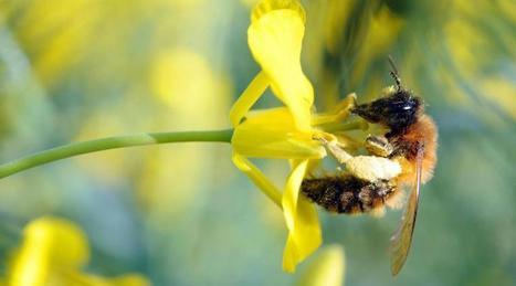 Écologie. Un plan national d'action en faveur des abeilles | Actualités écologie | Scoop.it