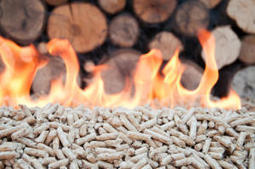 Companies could make the switch to wood power | Sustain Our Earth | Scoop.it