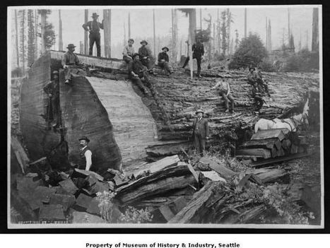 Photos: A tale of the Northwest's logging past | History in Pictures | Scoop.it