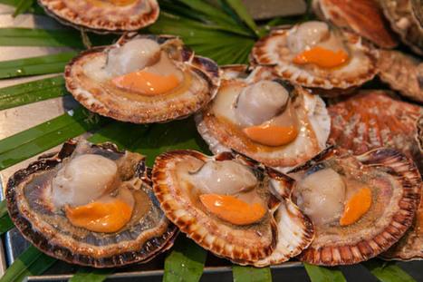 Recette Noix de Saint-Jacques à l'Armagnac - 7 Recettes de cuisine | Accords mets & Armagnac | Scoop.it
