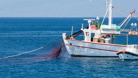 M&S becomes first retailer to make Responsible Fishing pledge | Food Trends & News | Scoop.it