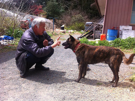 The Radioactive Man Who Returned To Fukushima To Feed The Animals That Everyone Else Left Behind | Animals R Us | Scoop.it