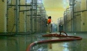 Miami-Dade Co. Adopts No-Kill Animal ShelterProgram - CBS Miami | Animals R Us | Scoop.it