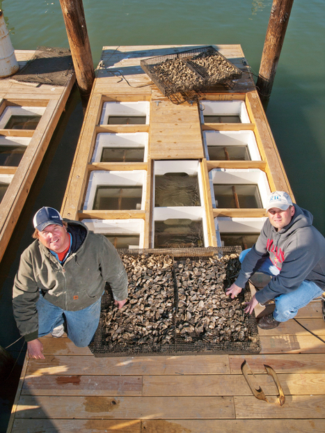 Privatizing the Chesapeake - Reason Magazine | Aquaculture | Scoop.it