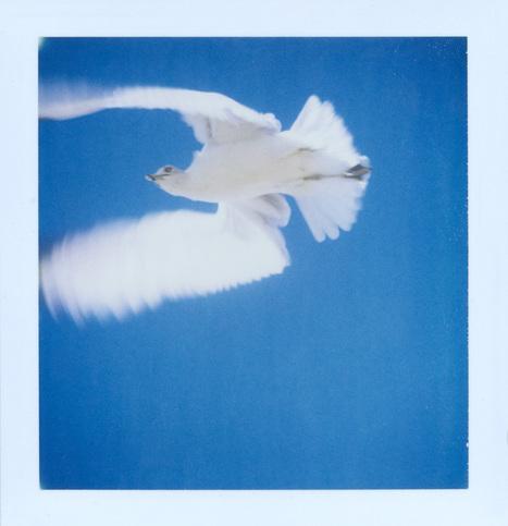 Patrick Tobin | Polaroid | Scoop.it