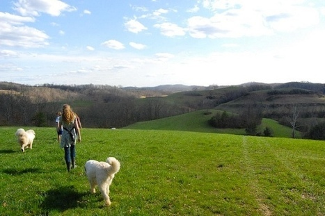 5  New Things to do Outside with your Dog - Pet360 Pet Parenting Simplified | cats & dogs! | Scoop.it