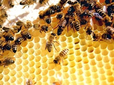 Light therapy can help bees be more productive, finds study - Cantech Letter | La recherche en apiculture | Scoop.it