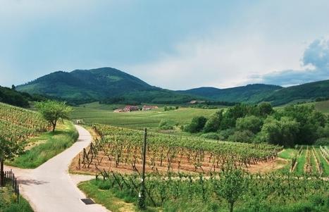 Le domaine Ostertag fête ses 50 ans | Gastronomy & Wines | Scoop.it
