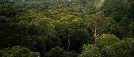 Scientists: Extinctions Just as Damaging as Climate Change | JWK Geography | Scoop.it
