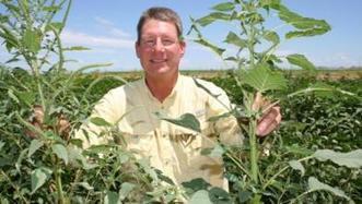 Glyphosate resistance changes Arizona cotton industry   Western Farm Press   CALS in the News   Scoop.it