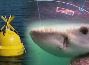 Australie : une alerte anti-requins relayée par satellite - euronews | Australie | Scoop.it
