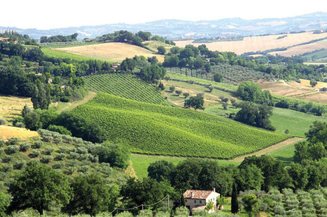 Wines of The Marche - Yet another article | Wines and People | Scoop.it