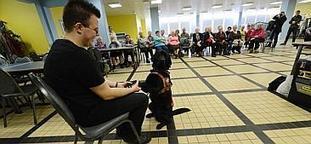« Mon chien guide, c'est mes yeux »   CaniCatNews-actualité   Scoop.it