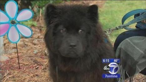 Norwalk family saved from fire by dog - 7Online.com | Dogs Gone Wild | Scoop.it