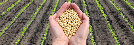 L'Europe autorise un soja OGM fabriqué par Monsanto | Chronique d'un pays où il ne se passe rien... ou presque ! | Scoop.it
