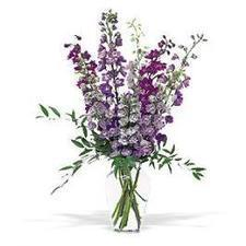 These dramatic blue delphinium will tell that special someone they're just like a dream come true.Address:- 1496 Hollis Street Halifax NS B3J 1V1  Phone:- (888) 391-9844  Visit us:- http://www.loca... | My House of flowers | Scoop.it