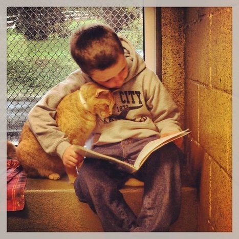 Little Kids Read Books To Shelter Cats, Adorableness Ensues | Reading discovery | Scoop.it